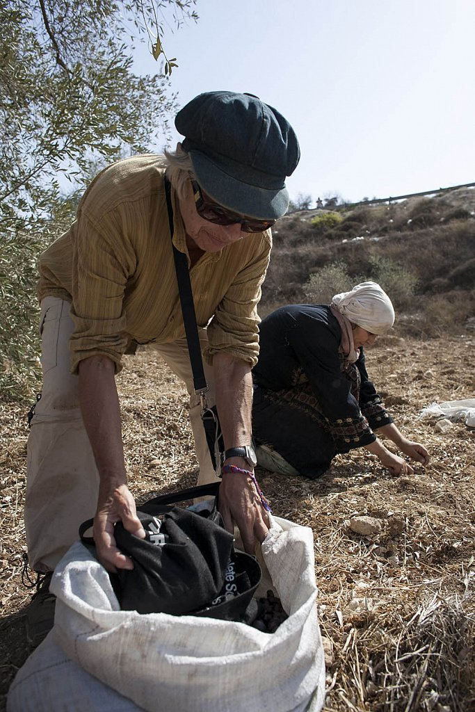 Israeli activists helping in harvesting a Palestinian family